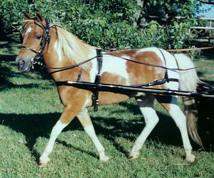 Miniature Horse and Pony Harness