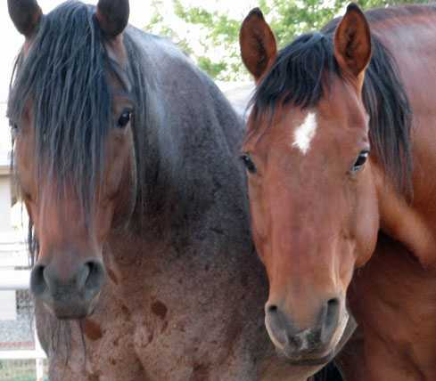 New Mexico's Premier Equine Retirement & Rehab