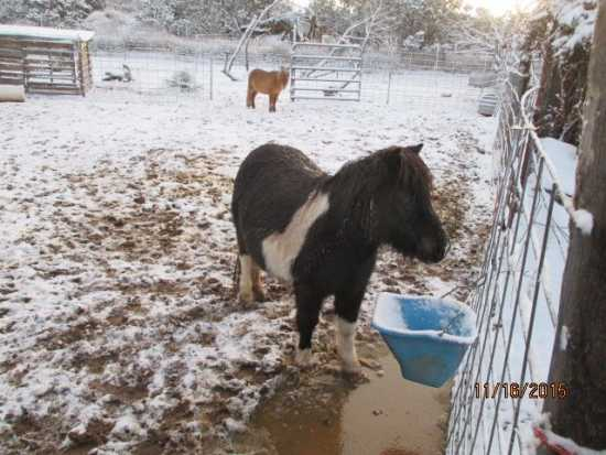 Were your horses cold this morning?